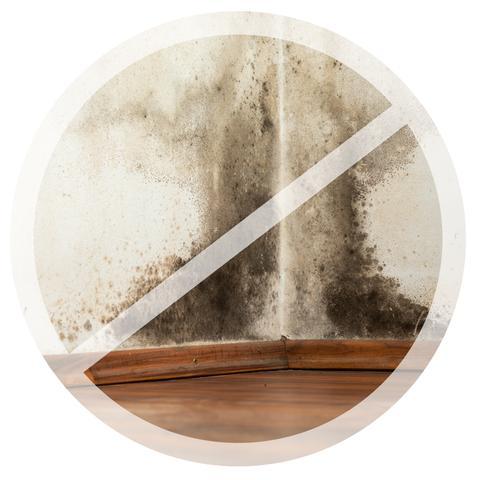 Per dipingere il bagno e la cucina utilizza una vernice antimuffa